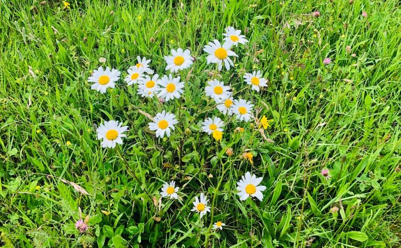 Bloom Away